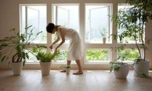 Conoce-los-beneficios-magicos-de-tener-plantas-en-casa
